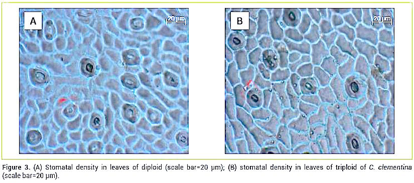 stomata density Recent studies of the arabidopsis stomata mutants stomatal density and distribution1-1  about sciencedirect remote access shopping cart contact and support terms.