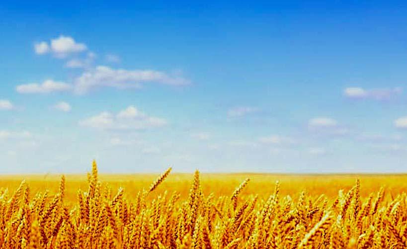 Grass stomata and climatechange