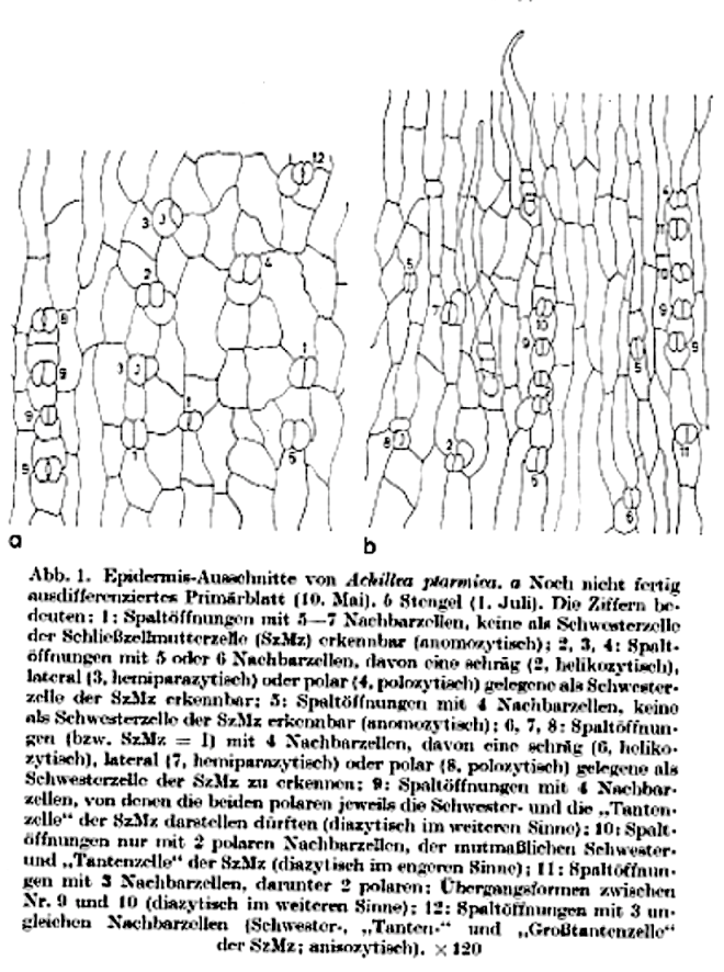 PLANT STOMATA ENCYCLOPEDIA – Page 401 – the science of the stomata ...