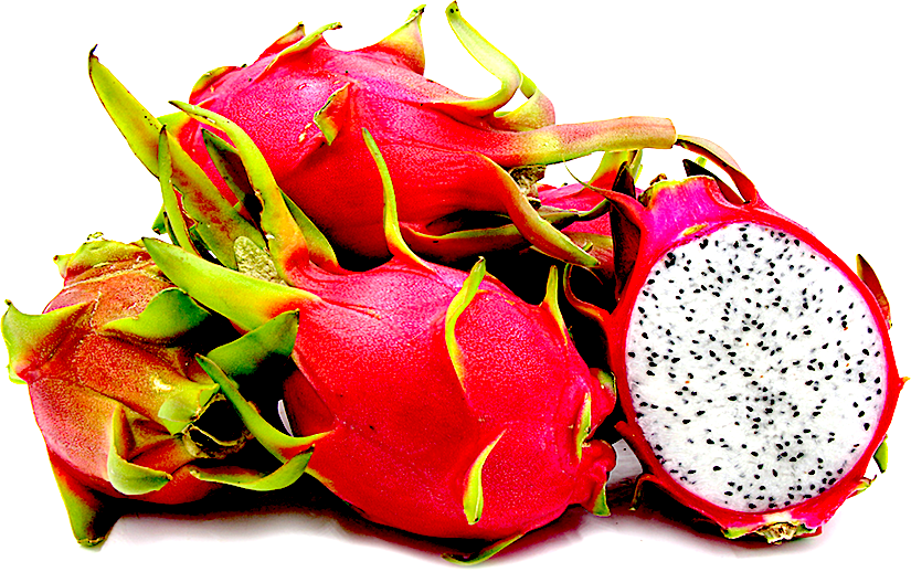 Density of stomata is higher in bracts than in peel of dragonfruit