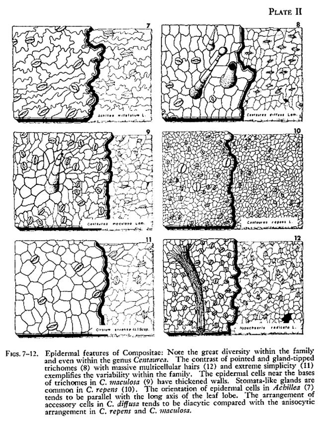 Ungewöhnlich Anatomie Des Fortpflanzungssystems Ausüben 27 Antworten ...